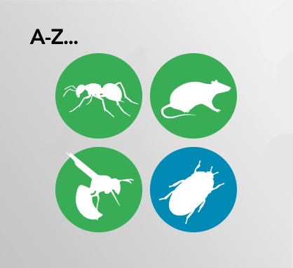 A-Z of pests
