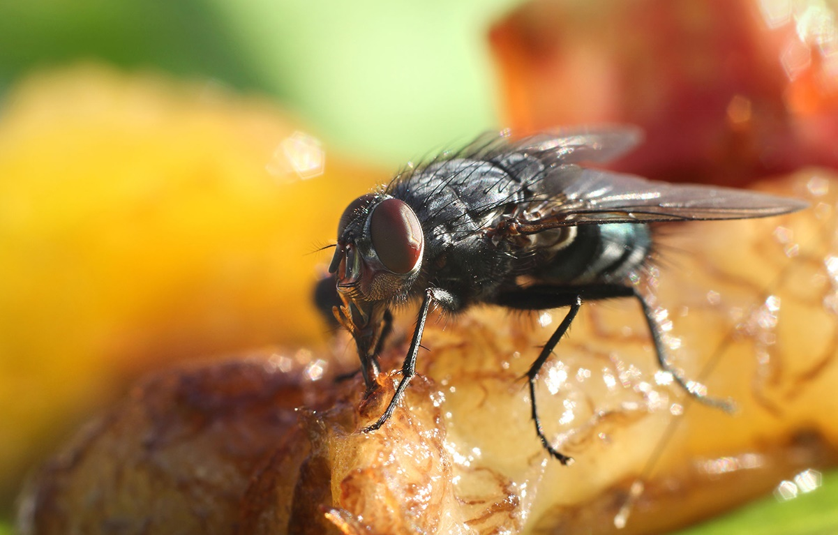 If you followed a fly for a day, you wouldn't eat for a week