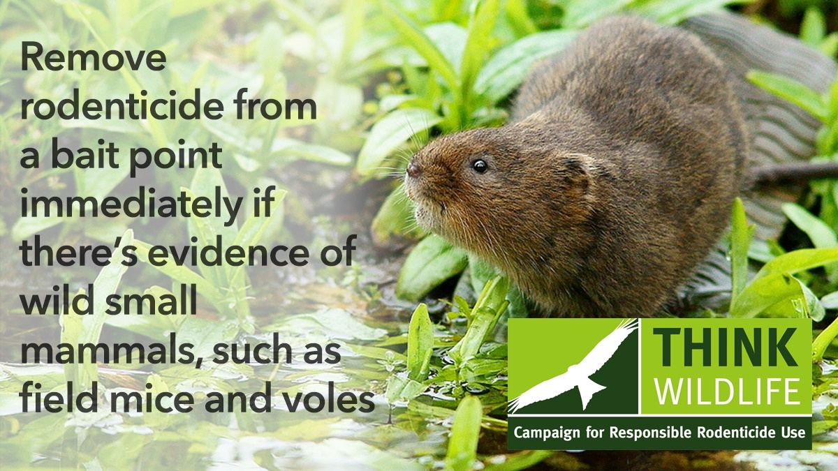 810 Remove rodenticide from a bait point immediately if there's evidence of wild small mammals, such as field mice and voles