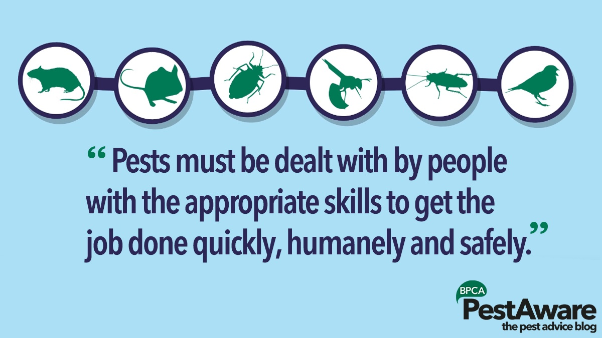 Pests must be dealt with by people with skills to get the job done quickly humanely safely