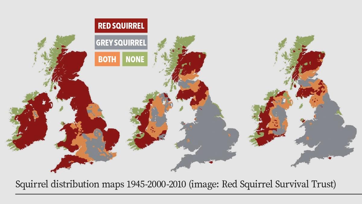 Squirrel distribution maps 1945-2000-2010