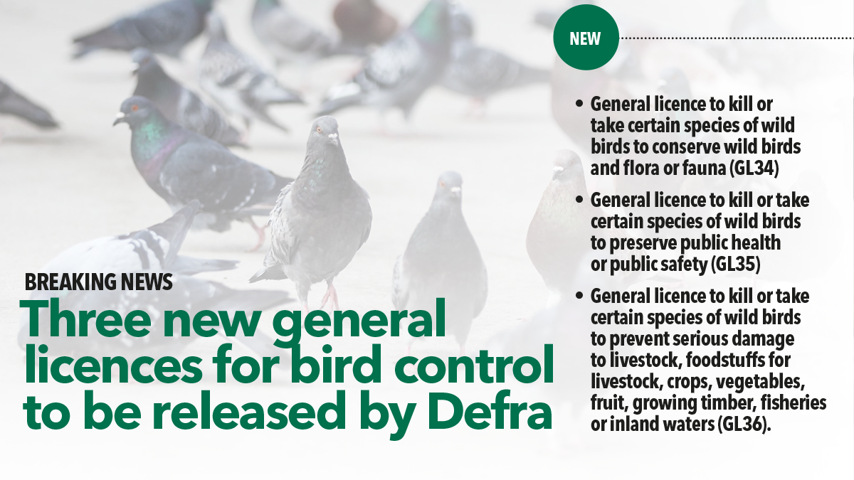 Three new general licences to be released by Defra