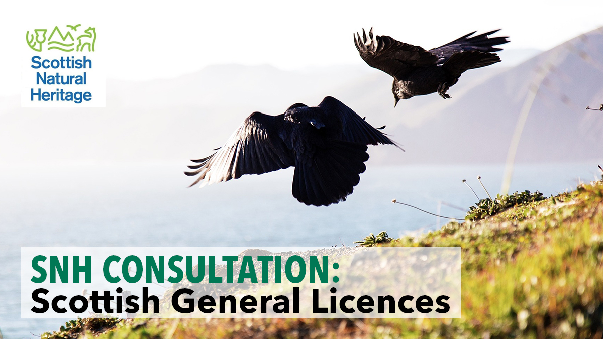 SNH consultation Scottish general licences