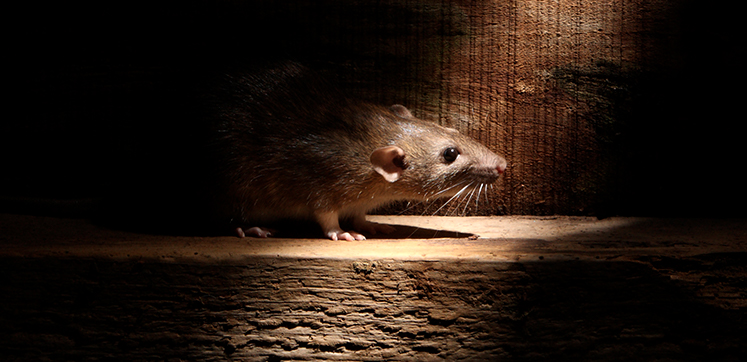 Pest Related News from Across the UK