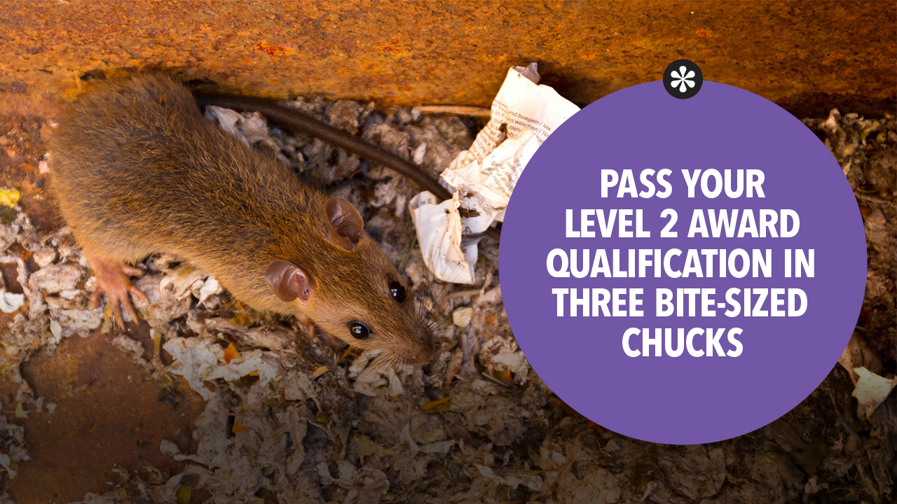 Pass you level 2 award in pest management in bite-sized chunks