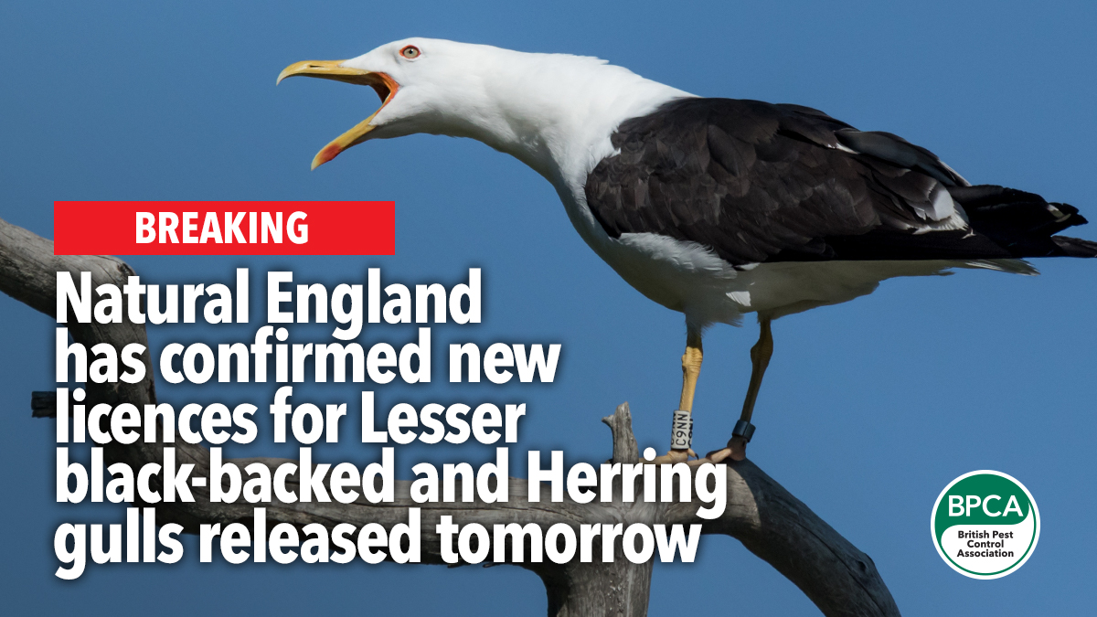 new licences released tomorrow gulls