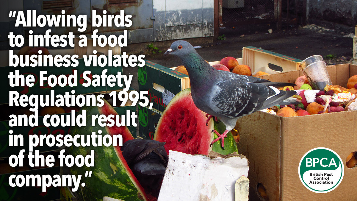 Allowing birds to infest a food premise is against the law in the UK