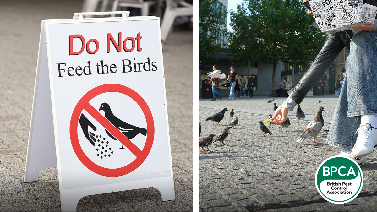 Do not feed the birds BPCA pest control