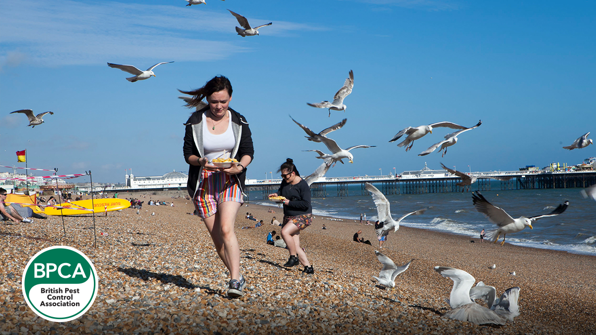 Gulls can pose a serious safety concern attacking people for food