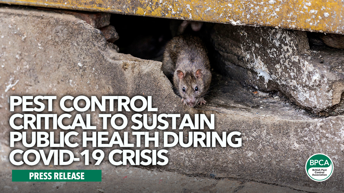 Pest control critical to sustain public health during Covid-19 crisis