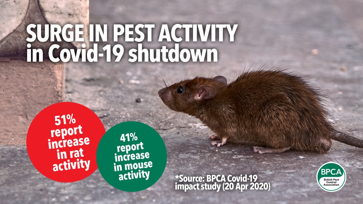 56 Press release increase in pest activity