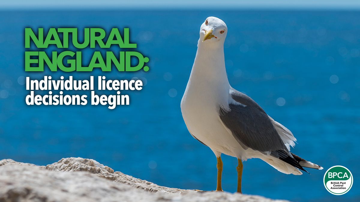 natural england individual licence decisions