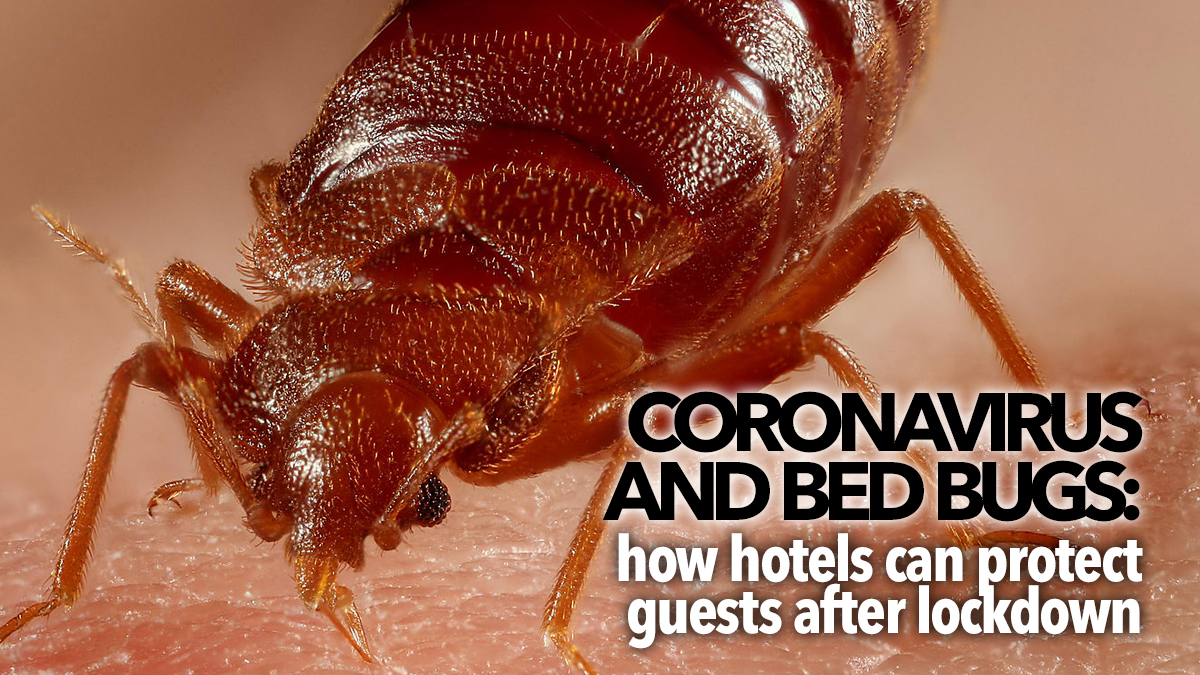 795 Coronavirus-and-bed-bugs-hotels-after-lockdown