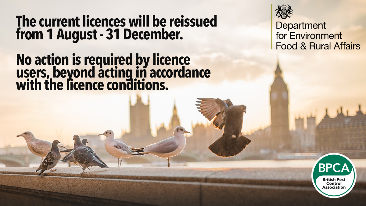 Defra changes to general licence for bird control June 2020 pest managment news