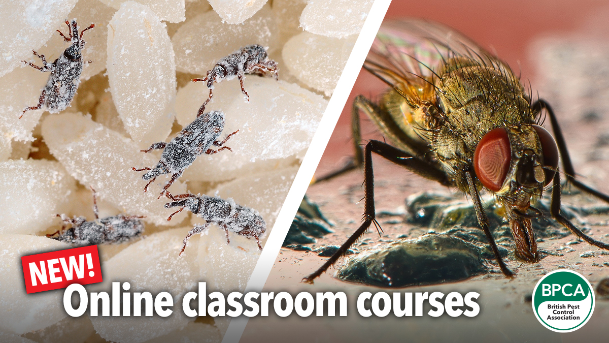 New online classroom courses for fly control and stored product insects for pest managment