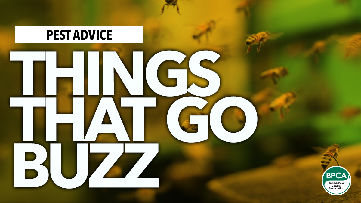 Things that go buzz advice for wasps hornets bee identification in UK