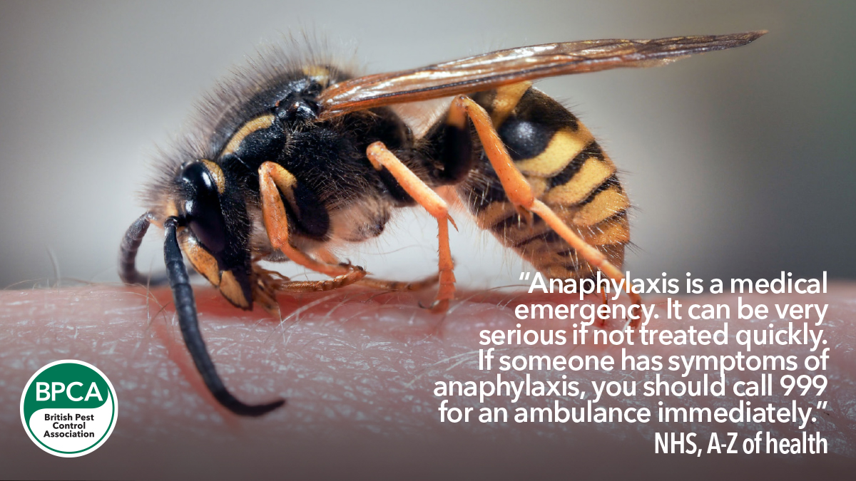 Wasps stings and Anaphylaxis in the UK common and german