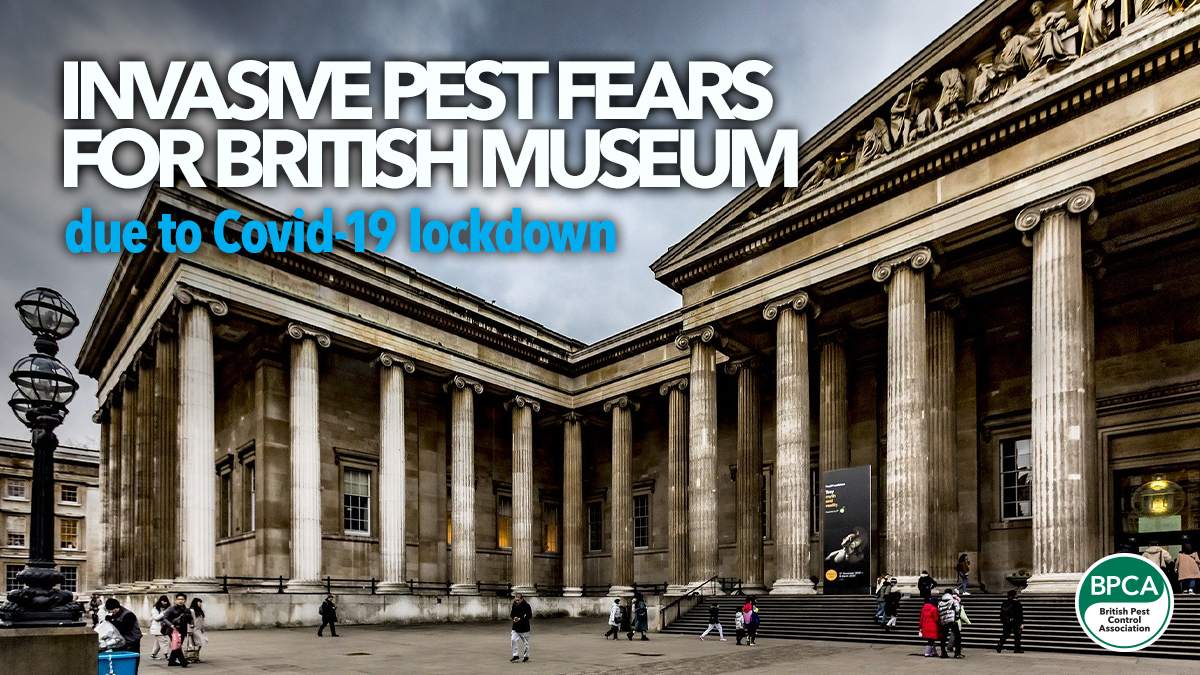 british-museum-invasive-insect-fears