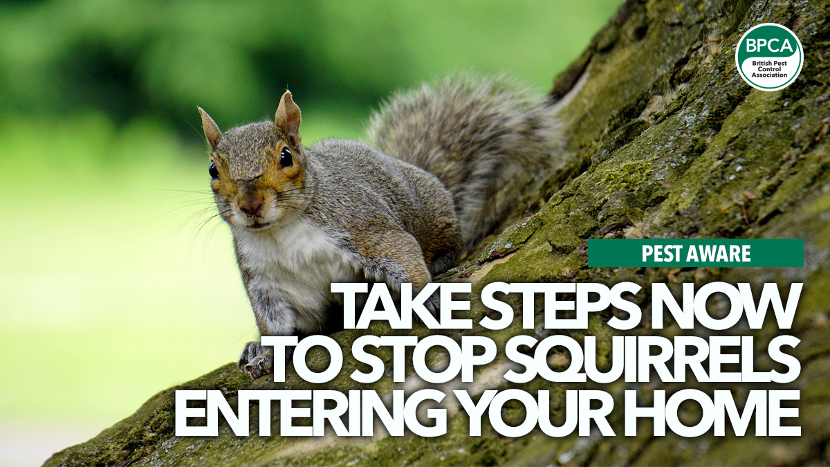 take-steps-to-stop-squirrels