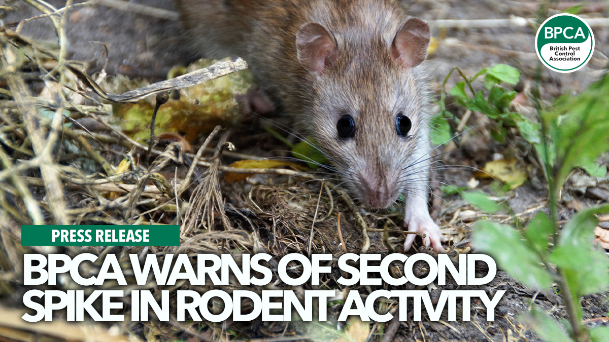 bpca-warns-of-second-spike-in-rodent-activity
