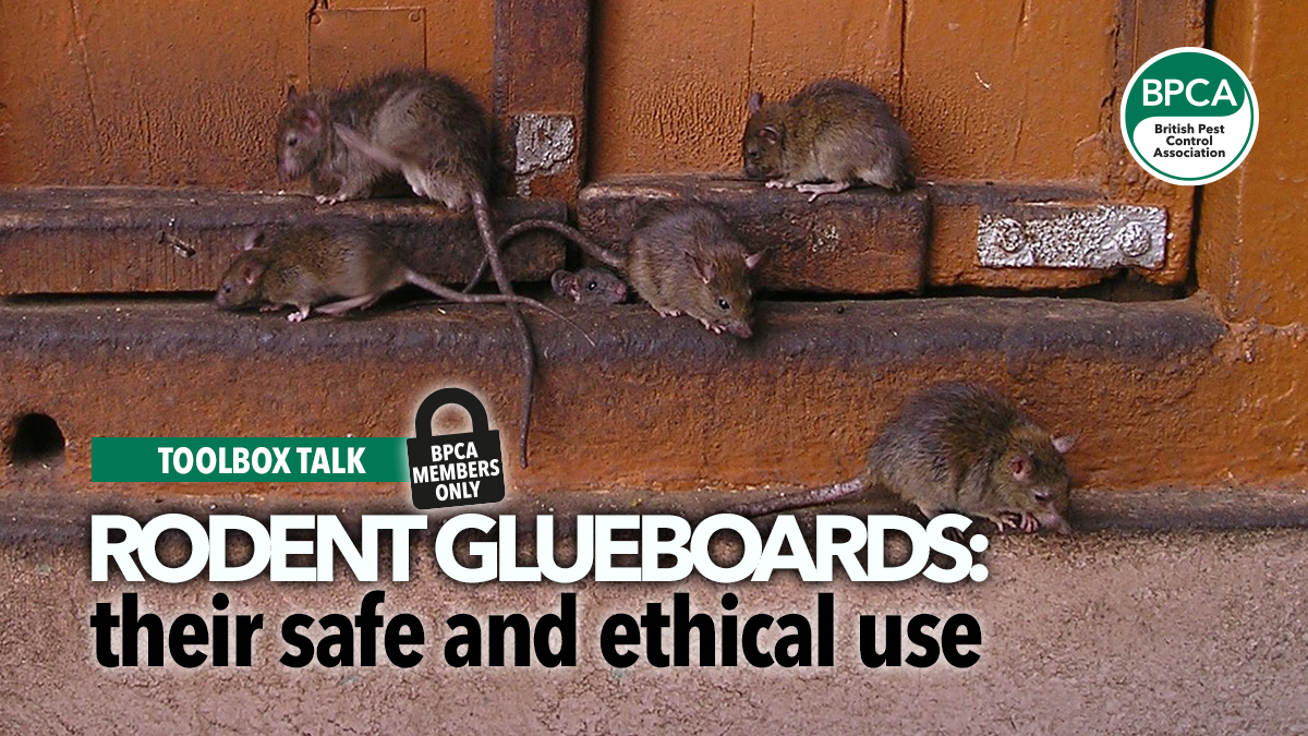 toolbox-talk-rodent-glueboards