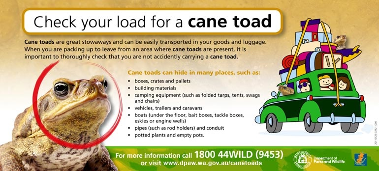 check-load-cane-toad-dpaw