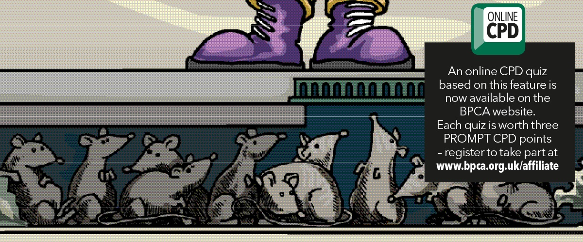 rats underfoot banner