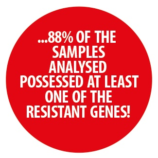 88 of the samples analysed possessed at least one of the resistant genes
