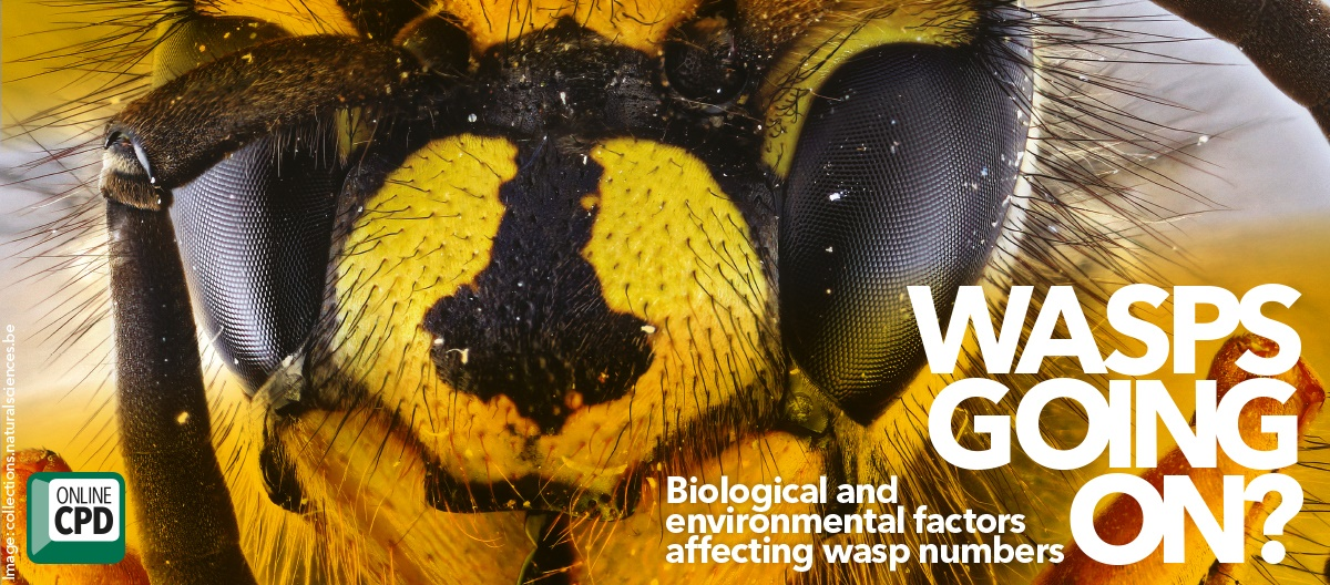 Biological environmental factors affecting wasp numbers