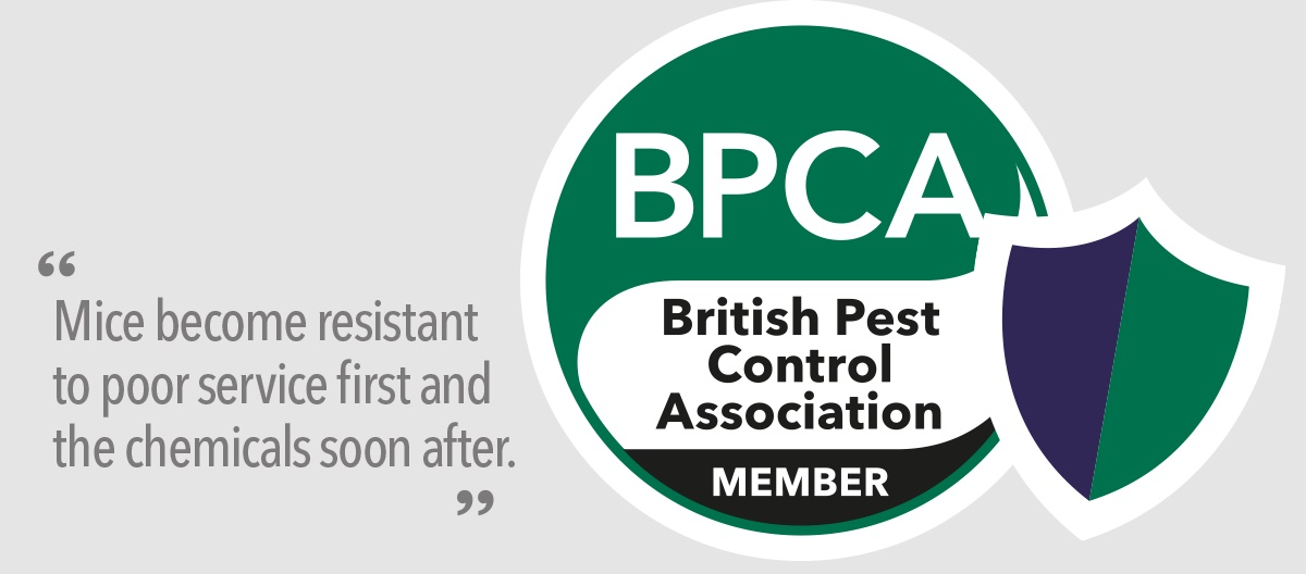 Leave it to the professionals BPCA