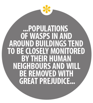 Populations of wasps in and around the buildings tend to be closely