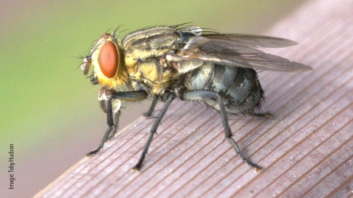 Birds nests can attract flies
