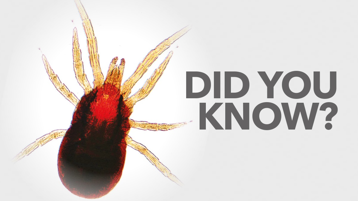 Did you know - Bird Mites