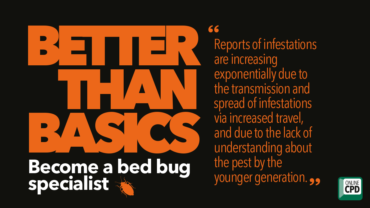Better than basics bed bug control