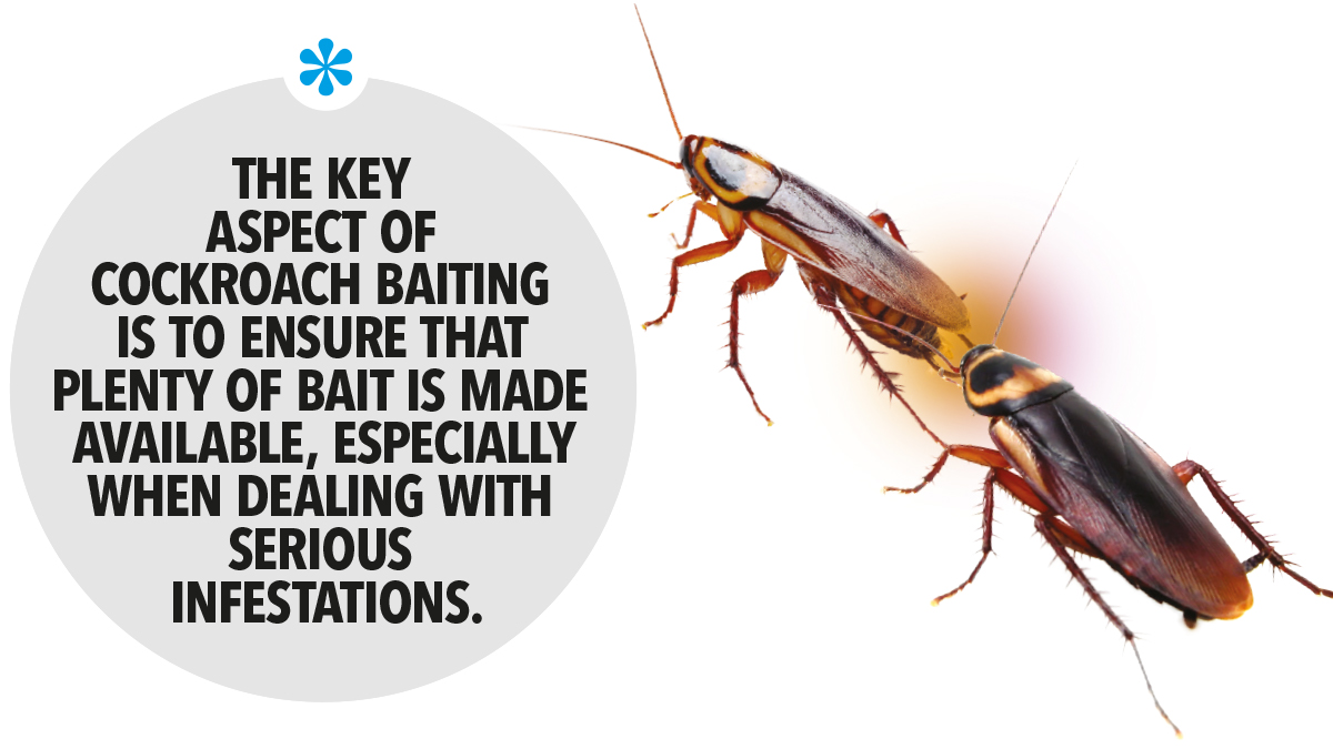 The key aspect of cockroach baiting is to ensure that plenty of bait is made available