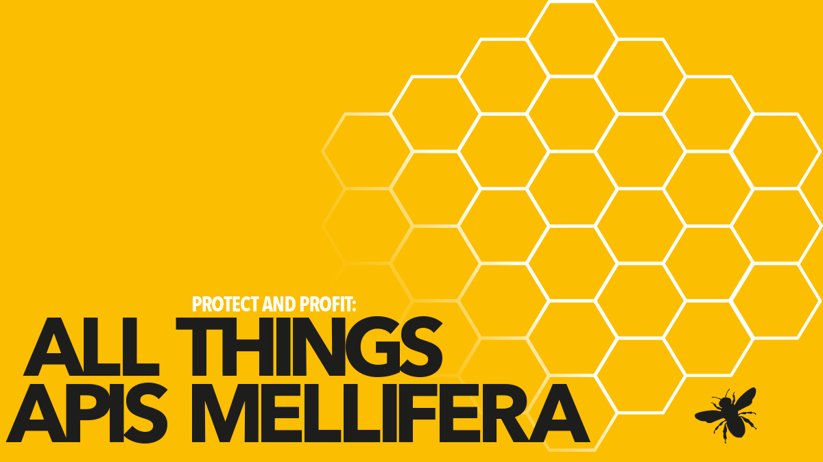All things Apis mellifera - profile and profit