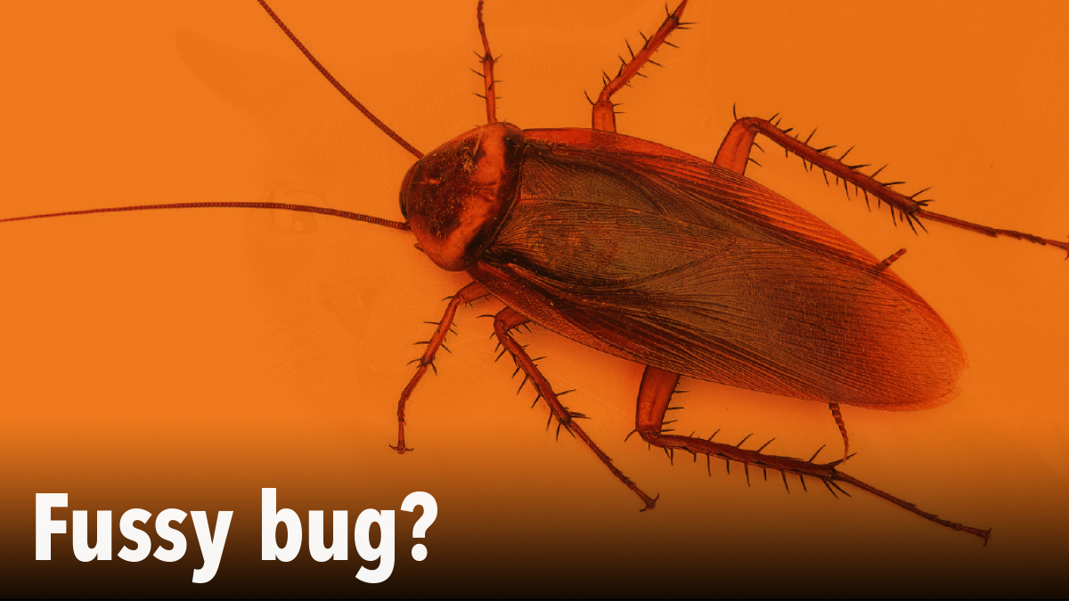 Fussy bugs in PPC magazine