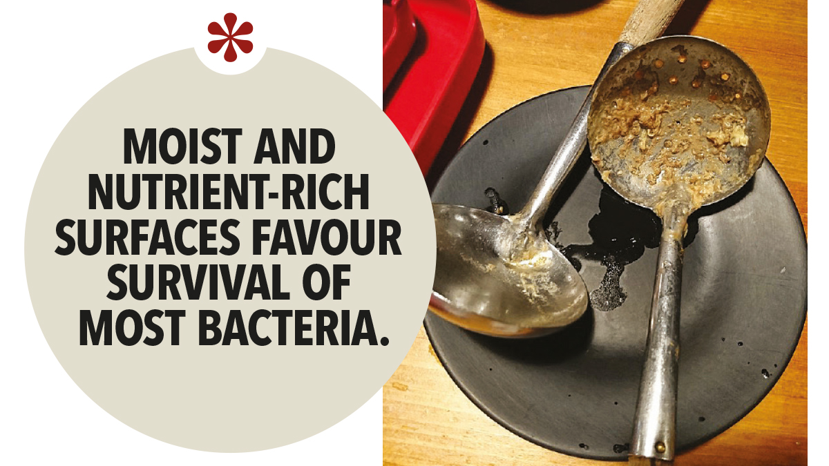 Moist and nutrient-rich surfaces favour survival of most bacteria