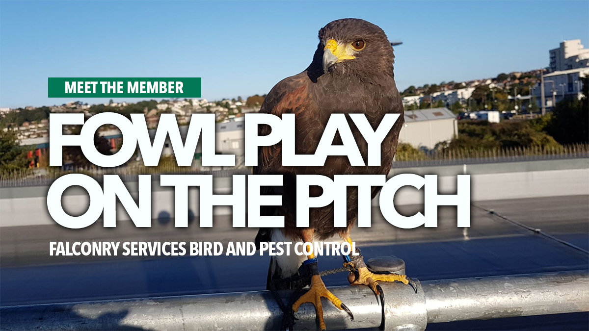 Fowl play falconry services bird and pest control