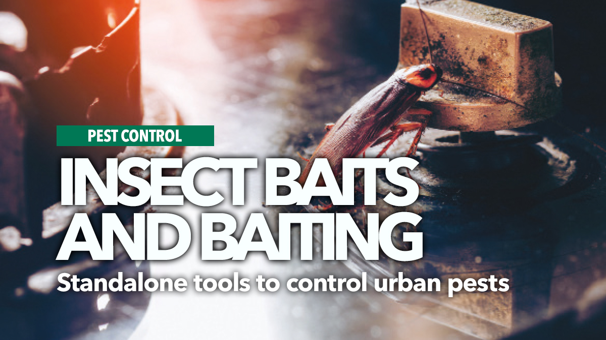 insect baits and baiting partho dhang 2