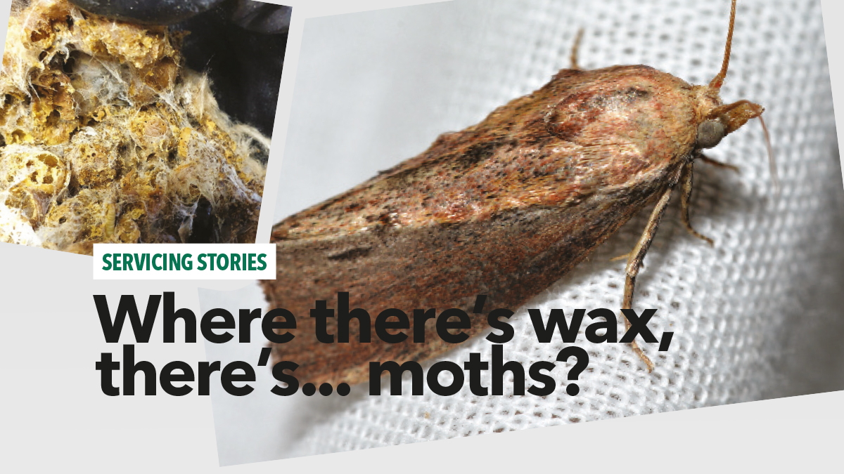 where theres wax theres moths independent pest