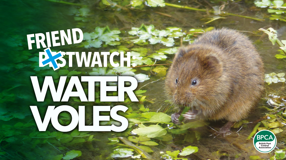 friend-pest-watch-water-voles