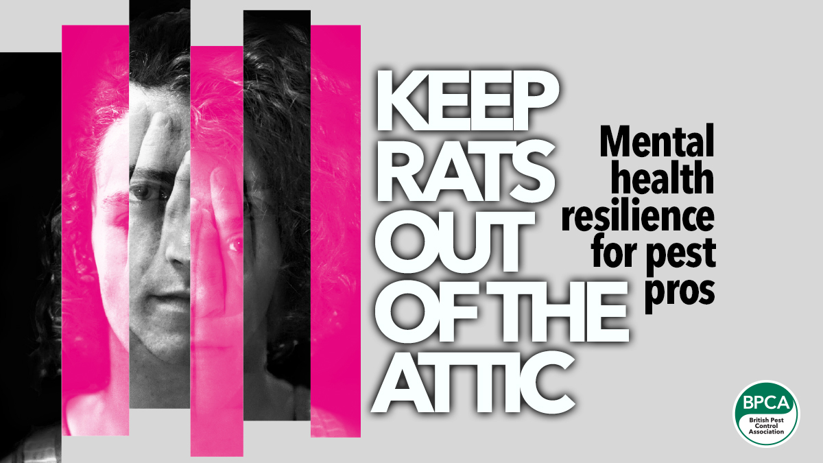 keep-rats-out-of-the-attic