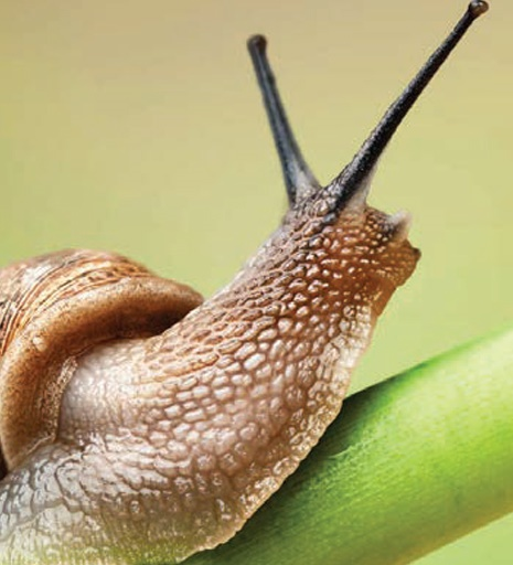 Brain invading parasite spread through slugs