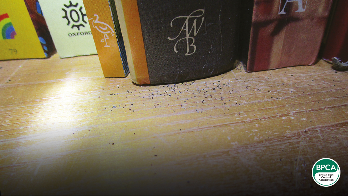 Figure 1: Damage and fecal deposits were detected along a row of books located on the floor next to a wall.