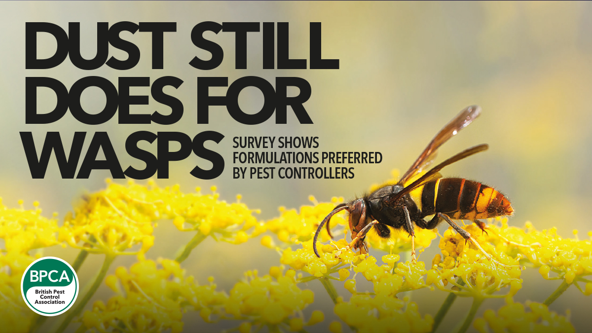 Survey shows formulations preferred by pest controllers BPCA magazine wasp control