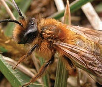 Pest advice for controlling Bees