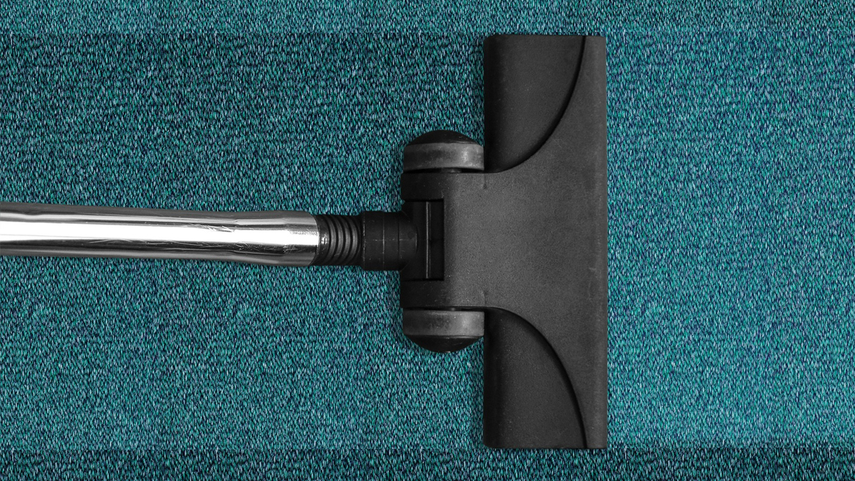 Fleas love to hide in carpet fibres, so vacuuming often helps keep infestations under control.