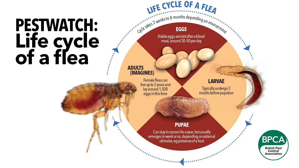 Pest Advice For Controlling Fleas