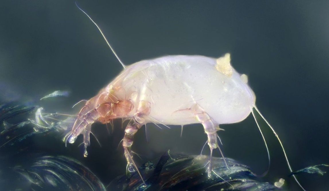 Pest Advice For Controlling Mites